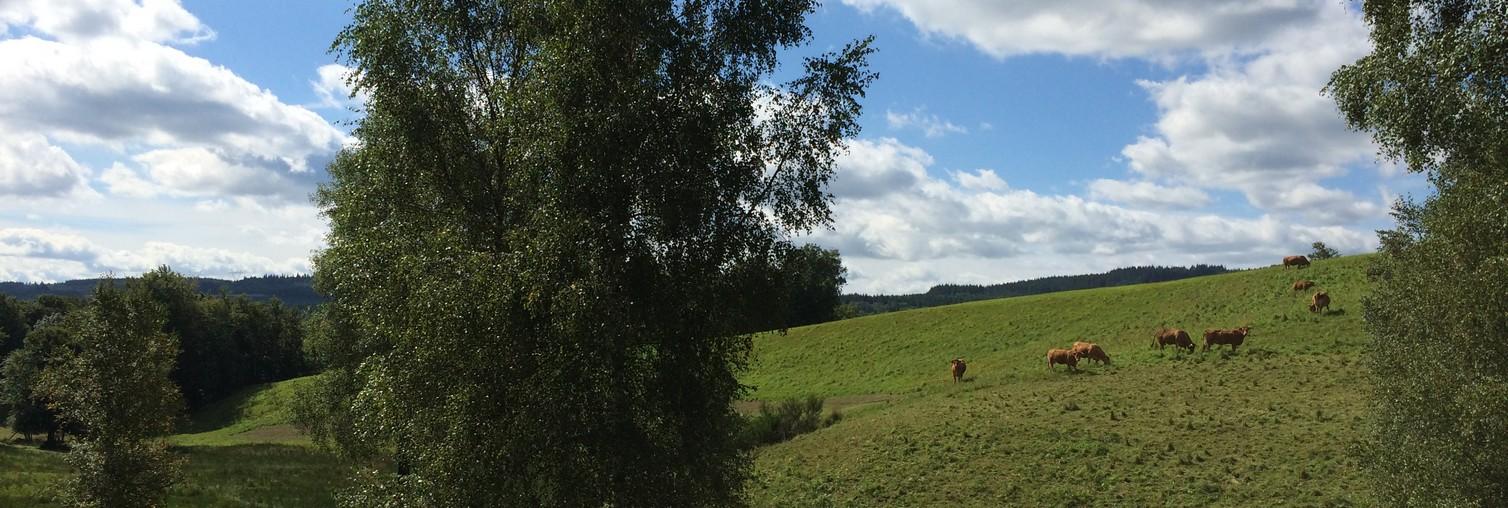 vache-diapo-accueil3